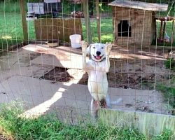 Hungry For Attention, He Wags Tail At Every Passerby, Hoping They'll Set Him Free
