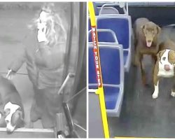 """Bus Driver Spots 2 Lost Dogs In Freezing Cold, Tells Them """"Hop On My Bus"""""""