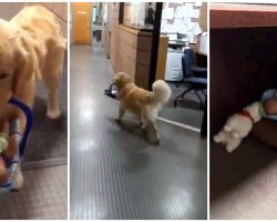 Police Pup Caught Stealing From Toy Drive: 'He Thought They All Belonged To Him'