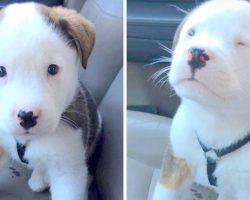 Precious Puppy Hiccups For The First Time, Panics & Tries To Make It Go Away