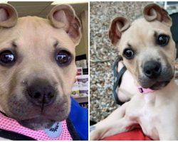 Rescue Puppy's Ears Resemble Cinnamon Rolls