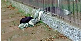 Puppy Drags Her Blanket Outside To Keep Another Cold Homeless Dog Warm