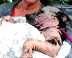 Puppy Left For Dead In A Sealed Box Wagged Her Tail In Hopes Someone Would Hear