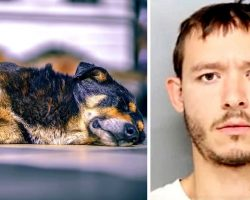 """Man Viciously Stabs Dog To Death Because The Dog Wouldn't """"Get Along"""" With Him"""