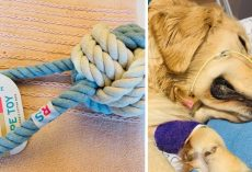 Dog Owner Warns Of Rope Toy Danger After Her Golden Retriever Passes Away