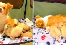 Mama Dog Sad After Losing Litter Finds Hope Again By Adopting Orphaned Puppies