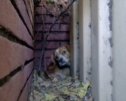 He Trembled With Fear As He Concealed Himself Behind Dumpster & Avoided The World