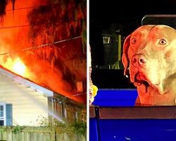 Dog Saves Family From Huge Fire But Watches In Horror As His Pet Siblings Perish