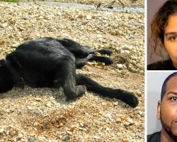"""Owners Chain & Starve Dog For Months Till She Collapses, Claim She's Not """"Important"""""""
