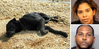 "Owners Chain & Starve Dog For Months Till She Collapses, Claim She's Not ""Important"""