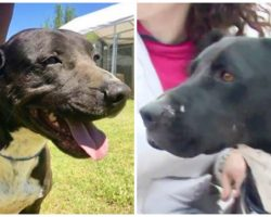 Friendly Dog Languishes For 7 Years At Shelter Because No One Wants Him