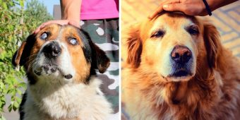 """Heartless Owners Trade """"Useless"""" Senior Dogs For Young Puppies In Holiday Season"""
