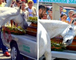 Horse Overcome With Grief At Owner's Funeral, Holds On To Coffin & Won't Let Go