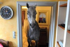 Random Horse Wanders Into Stranger's House And Makes Herself At Home