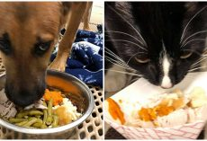 Shelter Animals Given Their Own Thanksgiving Meals So They Feel Included For Holidays