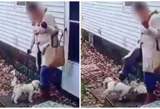 Hateful Woman Kicks Tiny Pup 3 Times So Hard That He Flies Several Feet In Air