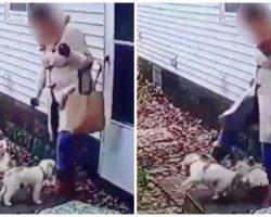 Hateful Woman Kicks Tiny Pup 3 Times So Hard That He Flies Several Feet In Air
