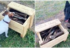 Crafty Man Builds 'Stick Library' For All Pups To Enjoy At New Dog Park