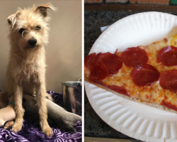 Stray Dog Comes Up And Steals A Piece Of Pizza, Leads Strangers To Her Pups