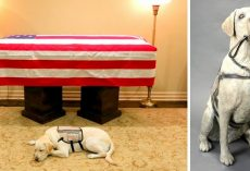 Pres. George HW Bush's Loyal Service Dog To Be Honored With A Life-Size Statue