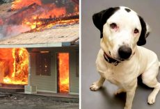 Dog Depressed After Losing Family In Fire, Help Him Find A Home Before Christmas