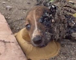 Puppies Found Covered In Hardened Tar Could Only Move Their Eyes