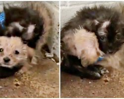 They Grip Each Other Tight In Corner Of Kill-Shelter On Disease Infested Floor