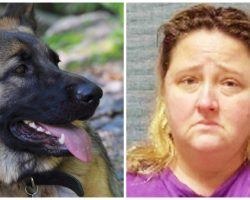 Woman Injects Two Dogs With 30 Vials Of Insulin In Attempt At Home Euthanasia
