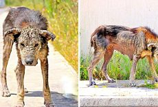 Unloved Dog's Body Turns Hard Like Stone, She Loses All Mobility & Waits To Die
