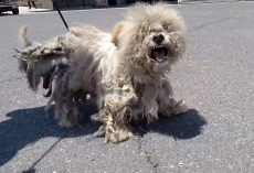 Vagrant Dog With 'Dwindling Spirit' Shrieked In Pain As They Crept Toward Him