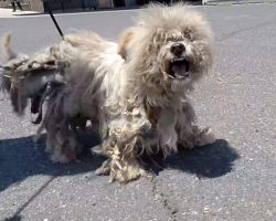 Vagrant Dog With Dwindling Spirit Shrieked In Pain As They Crept Toward Him