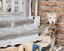 While The Other Dogs Played, Neglected Husky Sat Frozen With Fear In A Corner