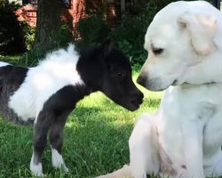 Tiny, Wobbly Horse Is Smaller Than Her Doggy Siblings