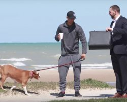 Man Offers Strangers $100,000 In Exchange For Their Dogs In Social Experiment