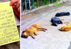 "Thug Sends Threat Mails & Poisons Dogs Who ""Bark"", $5000 Reward As 11 Dogs Die"