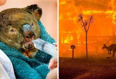Cops Hunt Down 24 Sinister Arsonists Who Deliberately Set The Australian Fires