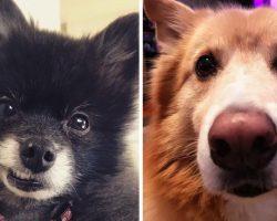 17 Reasons You Should Adopt A Senior Dog