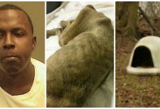 Dog Chained Outside Eats Leaves & Sawdust, Owner Keeps Dead Body In Yard