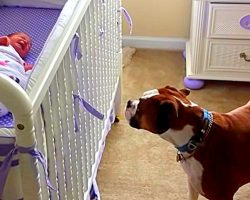 Dog Weeps Her Heart Out When She Hears Newborn Baby Crying For The First Time