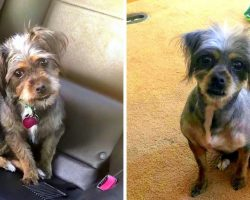 Disabled Veteran's Support Dog Goes Missing After Getting Spooked By Fireworks