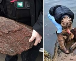 Someone Tied A Senior Dog To A Heavy Rock And Threw Her In The River