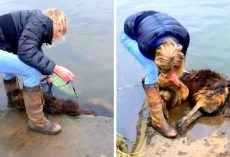 Psycho Owner Ties Large Rock To Dog & Throws Her In River, Laughs As She Drowns