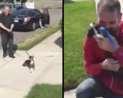 Bella Thinks It's Just Another Walk, Gets Reunited With Her Dad
