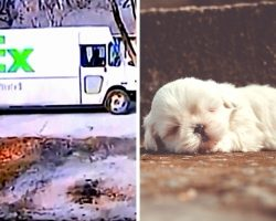 Dog Dies After Being Run Over By FedEx Driver Twice, Driver Shamelessly Escapes