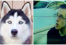 Guy Stalks Family For Weeks & Steals Their Husky In Broad Daylight