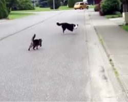 Cat 'Superhero' Defended Her Canine Friend Against The Neighborhood Bully