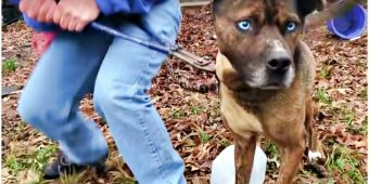 """Neighbor Chants """"Break The Chain!"""" As Dog Struggles Knowing Freedom Is So Close"""