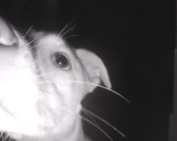 Dog Uses Doorbell To Get Owners' Attention After Locking Herself Out At 2AM