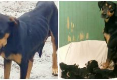 Sickly Mama Dog Leads Saviors To Litter Of 10 At House Of Horrors