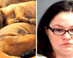Abused Mama Dog Leads Cops To Horror Hoarding Home Filled With Dead Animals